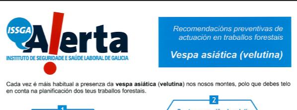 RECOMENDACIÓNS PREVENTIVAS DE ACTUACIÓN EN TRABALLOS FORESTAIS. VESPA ASIÁTICA (VELUTINA)